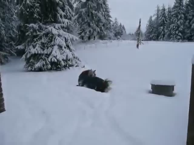 I Didn't Know a Horse Could Love Snow That Much!
