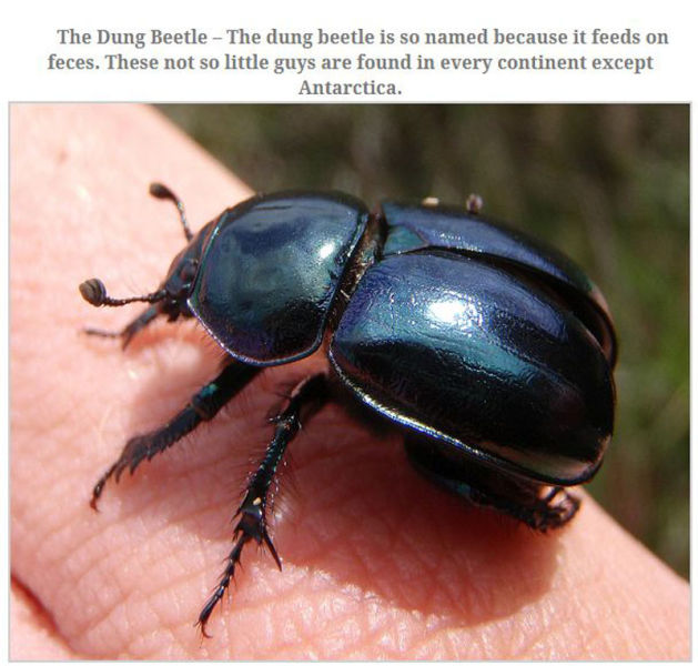 The Top 10 Biggest Insects Known to Man