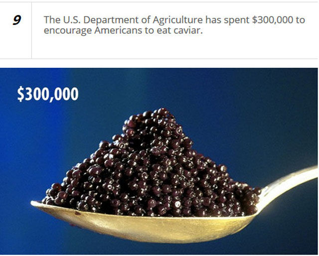 Odd Things That the American Government Are Actually Spending Money On