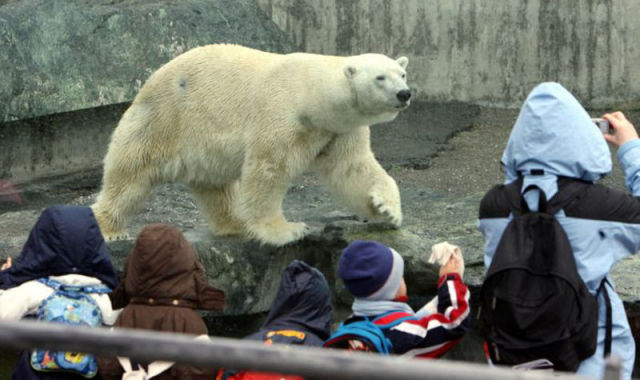 Zoo Visitors Responsible for Killing Polar Bear