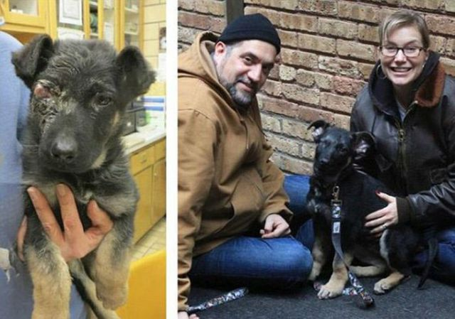Injured Rescued Animals Before and After Adoption