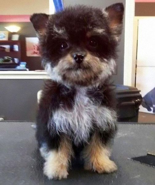 Adorable Dogs That Are Perfect Cross-Breeds