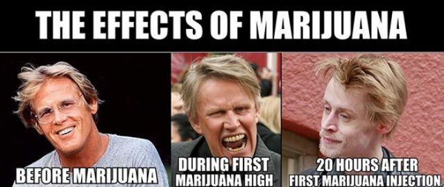 Common Mistruths about Marijuana
