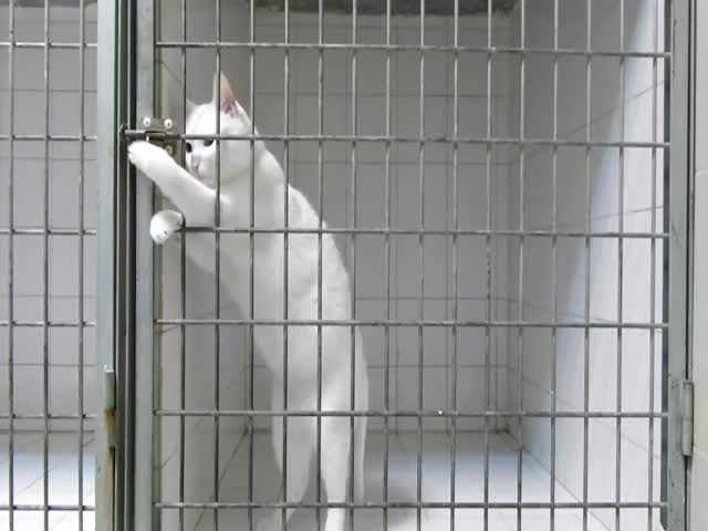 Prison Break: Cat Style  (VIDEO)