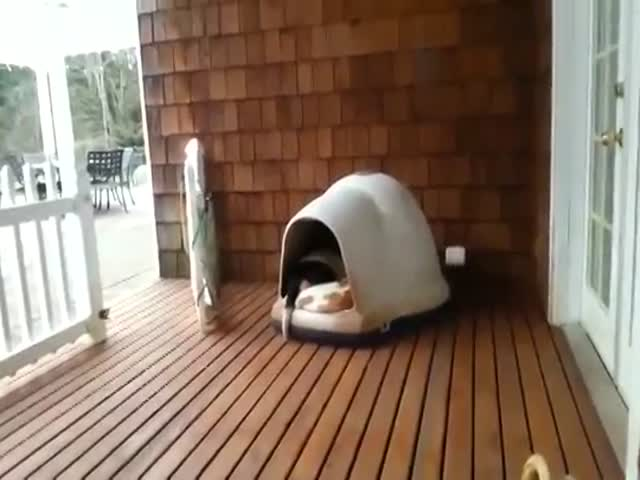 How Many Dogs Can Fit in This Doghouse?