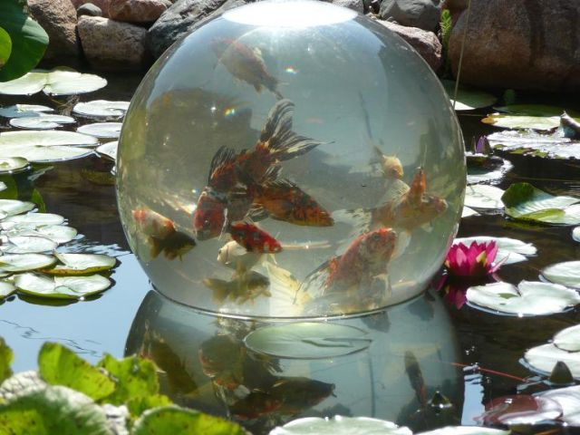 Add-A-Sphere Fish Bowl Makes Backyard Pond Cooler