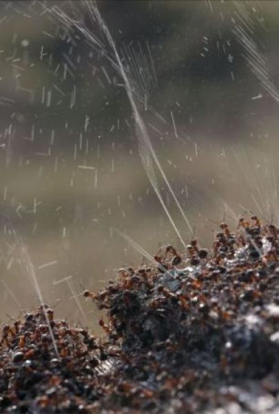 Ants Have Their Own Natural Protection from Birds