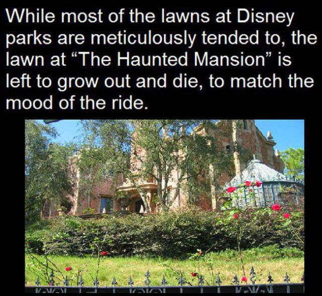 Things You Probably Would Never Guess about Disney Parks