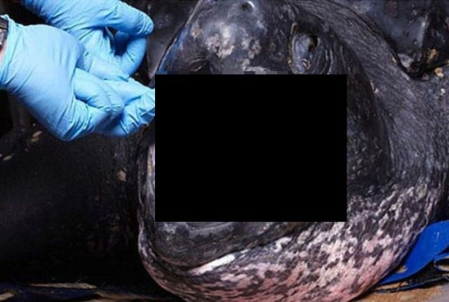 The Inside of the Leatherback Turtle