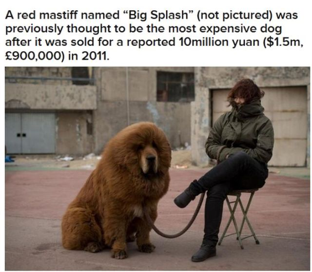 The Priciest Dog in the World