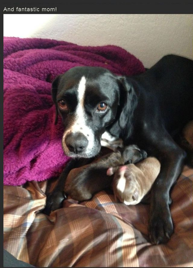 The Sweet Story of a Rescued Pregnant Dog Named Betty