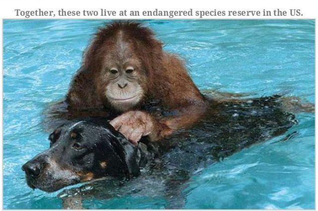 Animal Stories That Will Warm Your Heart