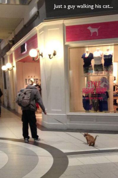 The Oddest Sights Ever Spotted in Malls