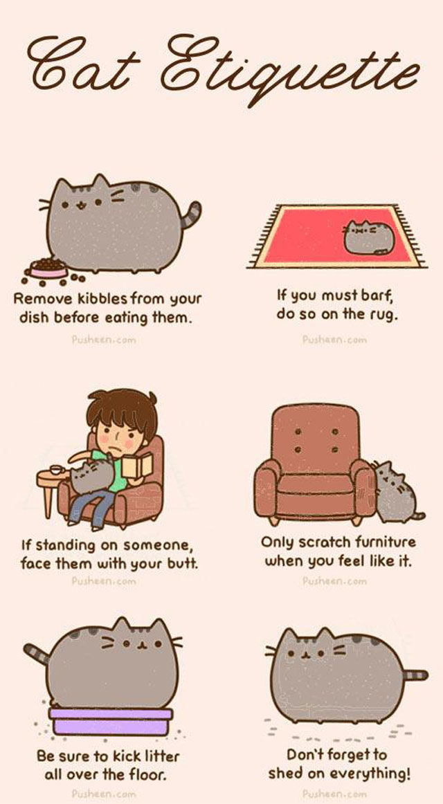 Cats Are a Very Special Kind of Pet