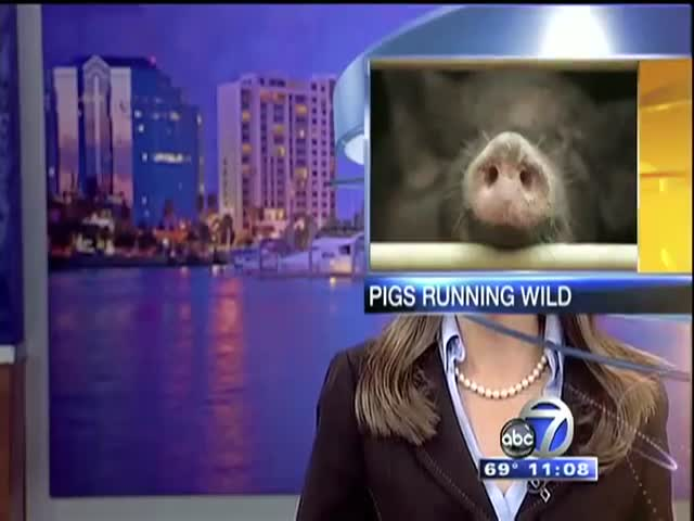 Best News Bloopers of March  (VIDEO)