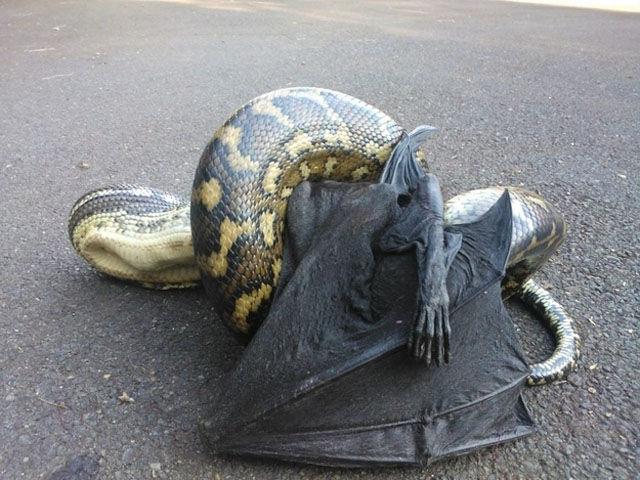 Опасные животные в австралии 30 фото 1