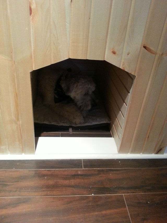 A Dog House That Is Beyond Cool