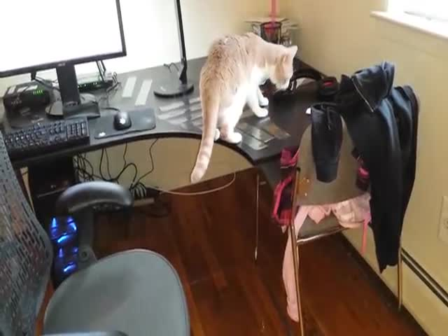 How to Keep Your Cat Off the Desk Using Scotch Tape  (VIDEO)
