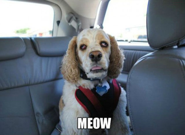 When Dogs Get High You Get These Hilarious Memes