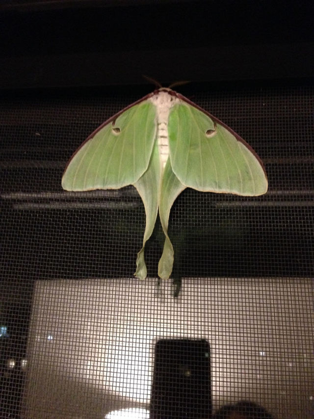 Caterpillar Transformed into a Huge Moth