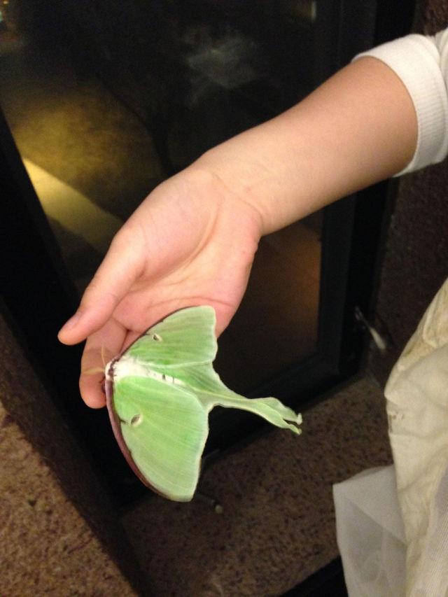 Caterpillar Transformed into a Huge Moth