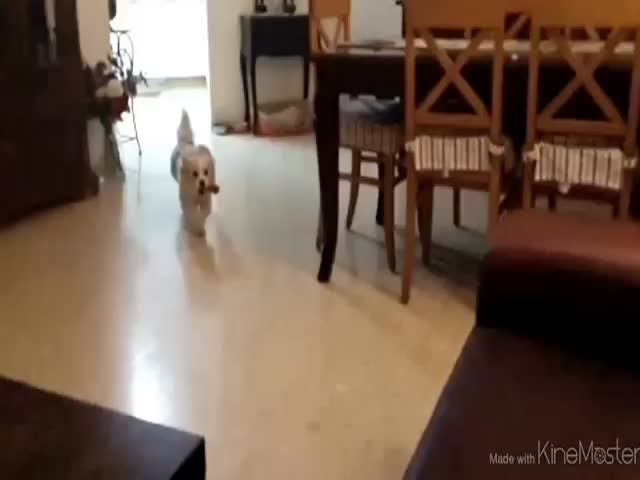 Dog Magnificently Fails His Jump on the Couch