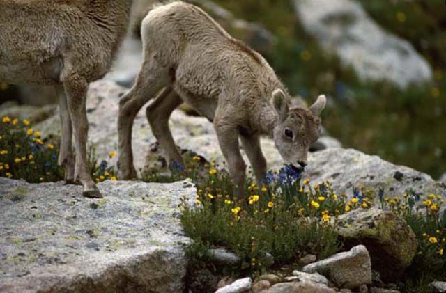A US State-by-State Guide to the Cutest Baby Animals