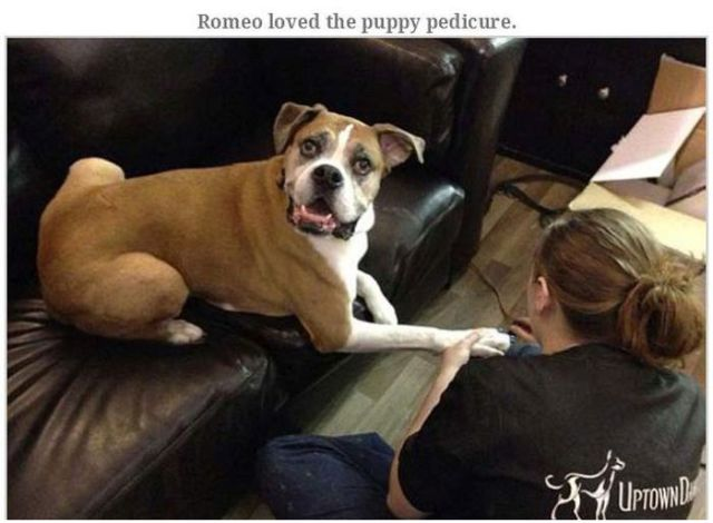 The Doggie Bucket List for Romeo's Last Living Days