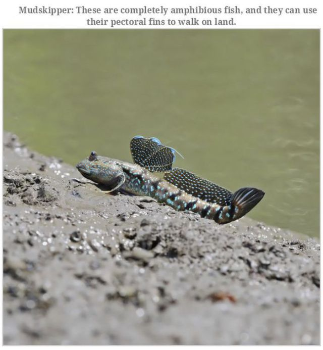 Bizarre Creatures and Animals That Are Actually Real