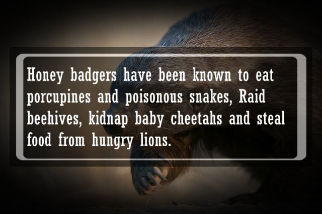 Animal Facts That Are Pretty Interesting