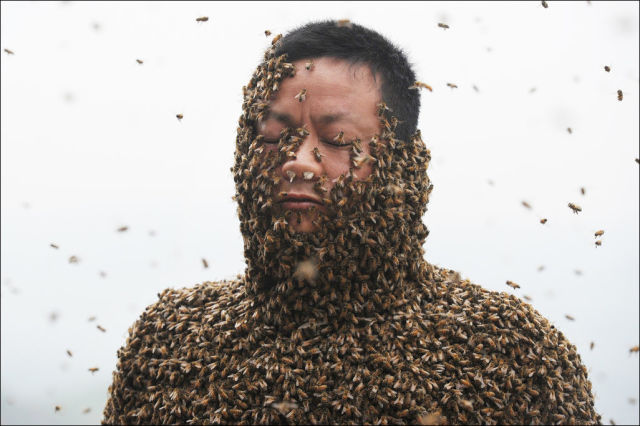 The Brave Record-Setting Chinese Beekeeper