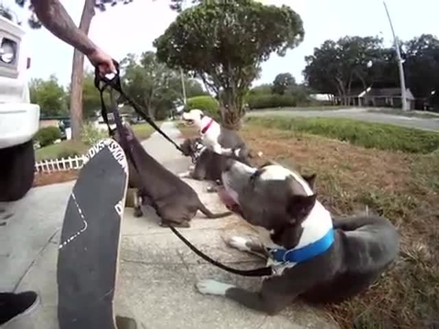 Pitbull-Powered Skateboarding