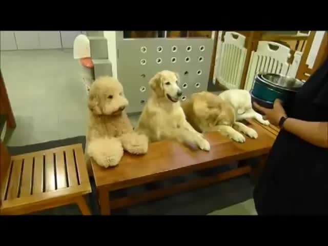 4 Well-Mannered Dogs Pray Before Dinner