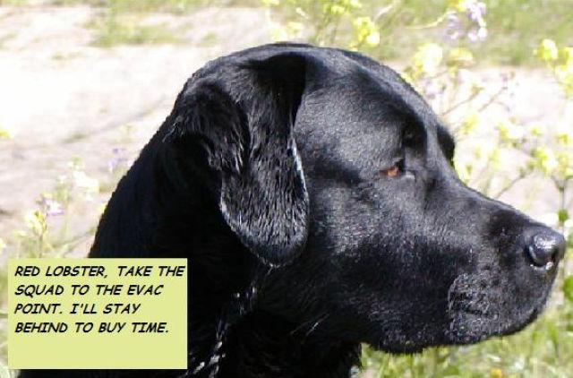 A Dog Story with a Twist