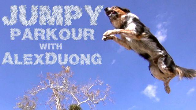 Impressive Parkour Dog