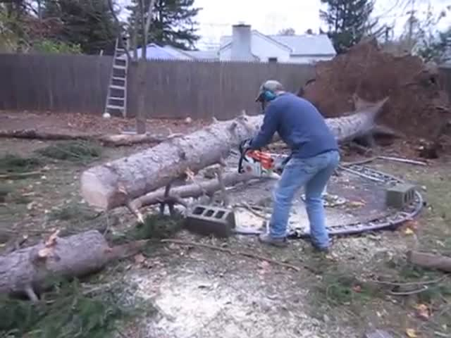 Dead Tree Doesn't Accept Its Fate  (VIDEO)