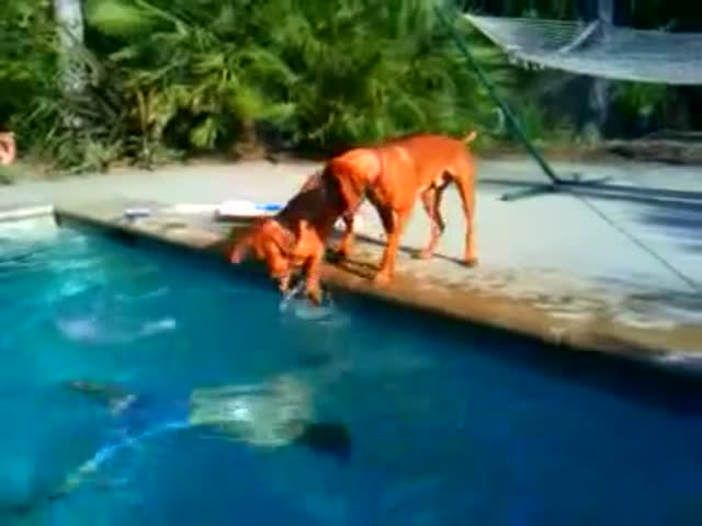 Dog Freaks Out When Owner Gets Underwater