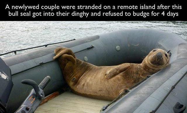 Animals Are Not Always Nice