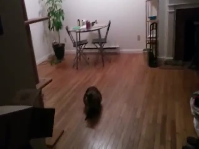 Cat Catches Bat Mid Air