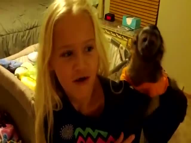 Pet Baby Monkey's Reaction to Seeing Grandma after a Week of Absence  (VIDEO)