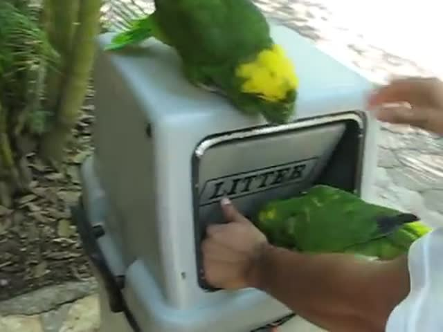 These Parrots Laugh like Women and It's Creepy