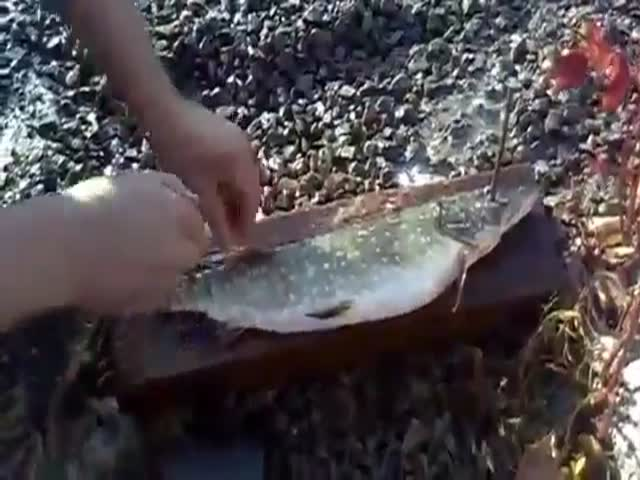How to Quickly Remove Scales from Fish