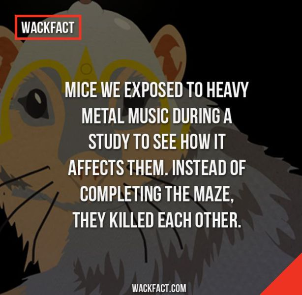 Bizarre Facts You Will Struggle to Believe
