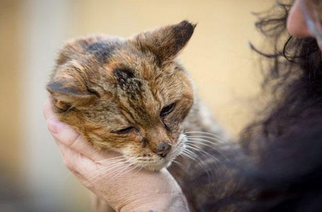 The World's Oldest Cat