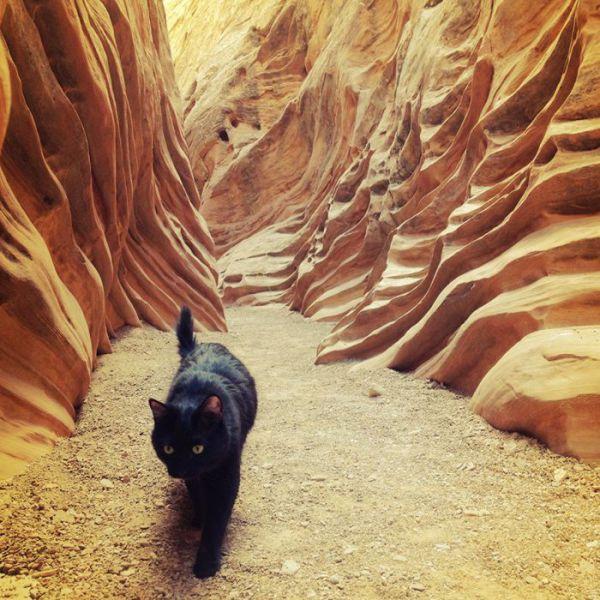 The Mountain Climbing Cat