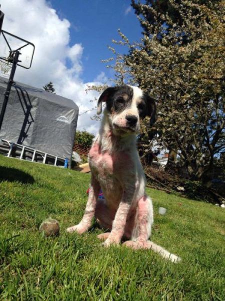 Injured and Neglected Dog Gets a New Life in 30 Days