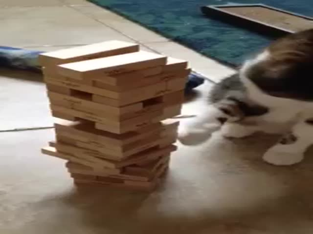 Jenga Cat  (VIDEO)