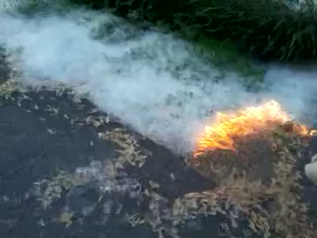 Burning Cottonwood Seeds  (VIDEO)