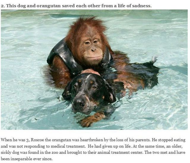 Sweet Animals and Their Touching Real-life Stories