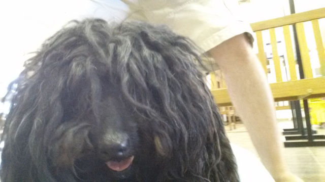 A Dreadlocked Neglected Dog Gets Rescued